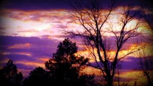 sunset greyerbaby